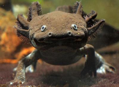 Zierfisch center elos aqua studio axolotl for Zierfisch teich